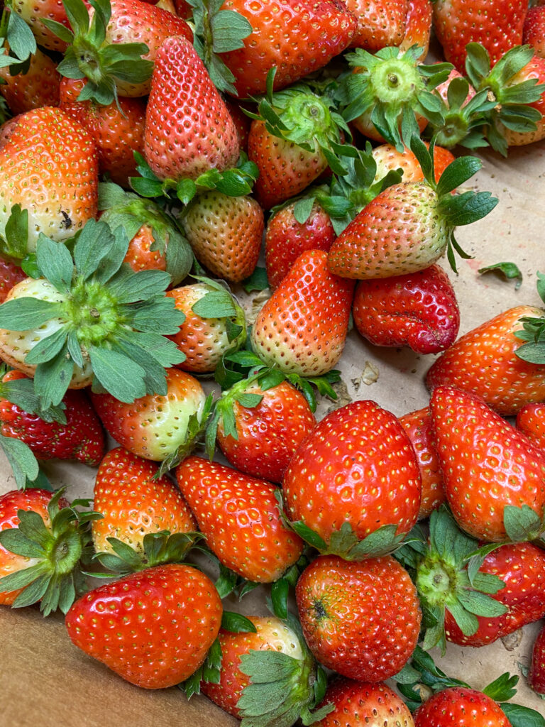 Fresh picked strawberries in a box.
